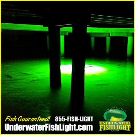 dock-light-snook-light-sarasota-fl-1400x1400