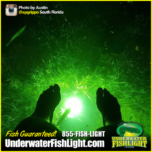 snooklightfloridafeetunderwaterfishlight-1400x1400