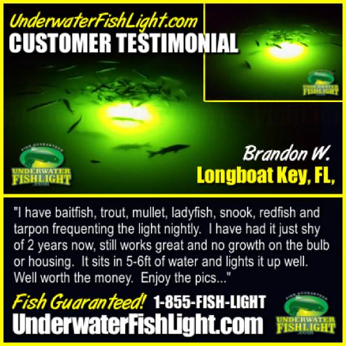 underwaterdocklightfishinglighttestimonialbybrandonwlonboatkeysnooklight-1400x1400