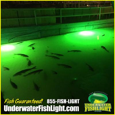 vibrantgreenunderwaterdocklightsrockinslakelewisville-1400x1400